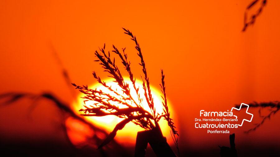 ¿Qué vitamina nos aporta el Sol?